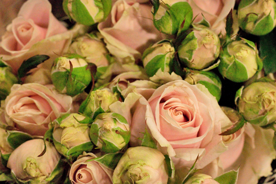Sweet Avalanche pale spray roses at New Covent Garden Flower Market