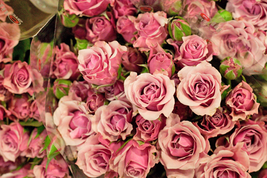 Pink Milka Sensation spray roses at New Covent Garden Flower Market