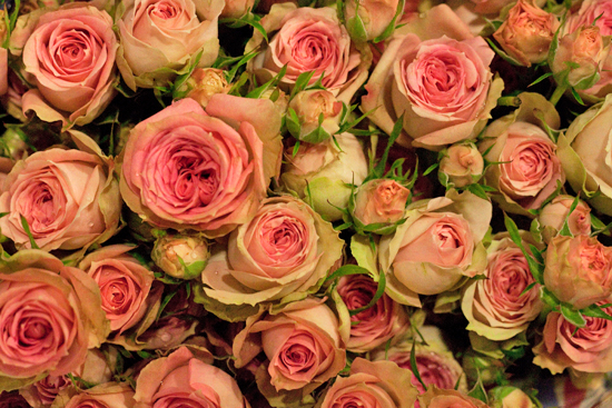 Pink pepita spray roses at New Covent Garden Flower Market