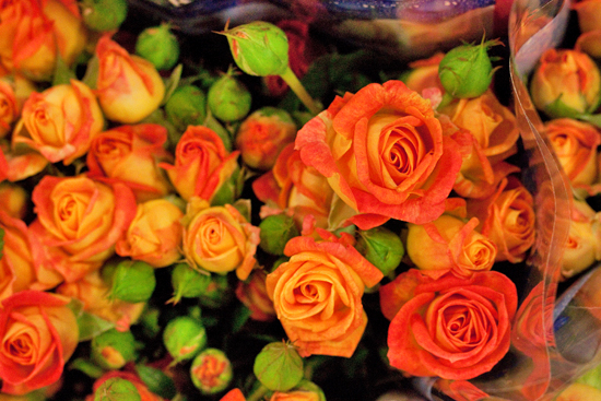 Orange Fiesta Bubbles spray roses at New Covent Garden Flower Market