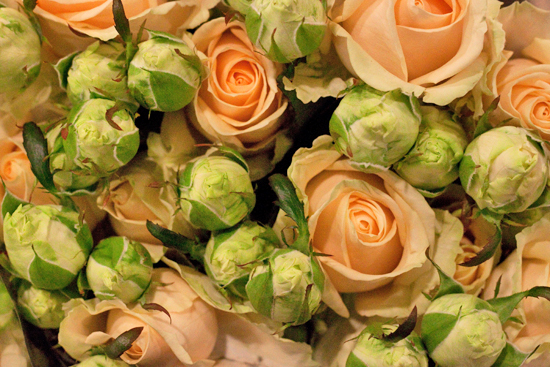 Peach Avalanche spray roses at New Covent Garden Flower Market
