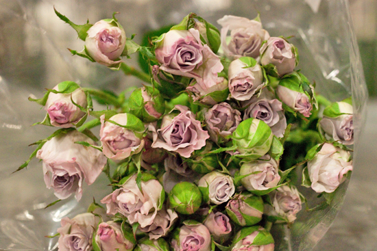 Little Silver spray roses at New Covent Garden Flower Market