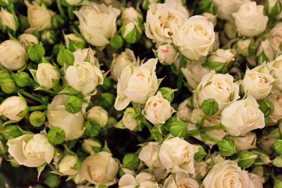 White Lydia spray roses at New Covent Garden Flower Market