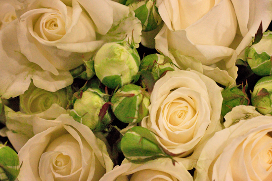White Avalanche spray roses at New Covent Garden Flower Market