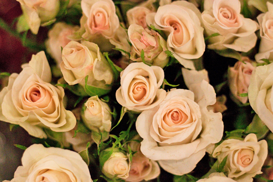 Porcelina spray roses at New Covent Garden Flower Market