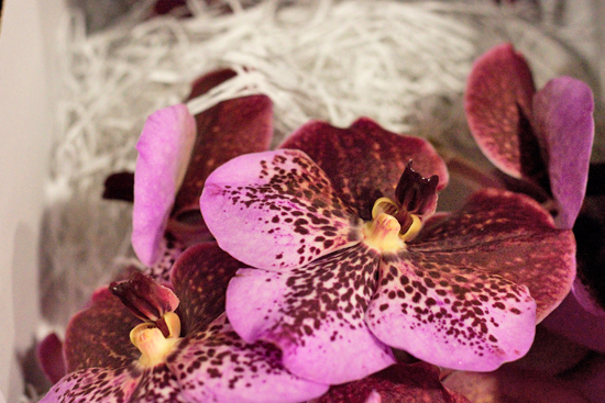 Pink & Mahogany Vanda Orchids at New Covent Garden Flower Market