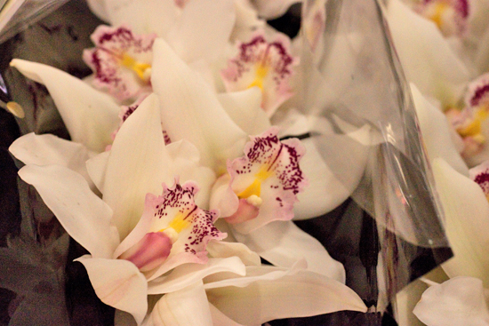 Silver Cymbidium Orchids at New Covent Garden Flower Market