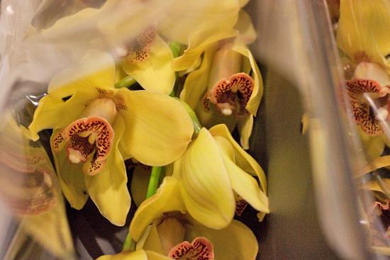 Nevada Geel Cymbidium Orchids at New Covent Garden Flower Market