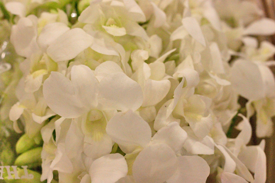 White Dendrobium Orchids at New Covent Garden Flower Market