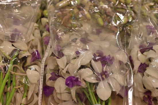 Den Woong Leng Dendrobium Orchids at New Covent Garden Flower Market