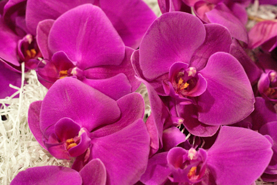 Purple Passion Phalaenopsis Orchids  at New Covent Garden Flower Market