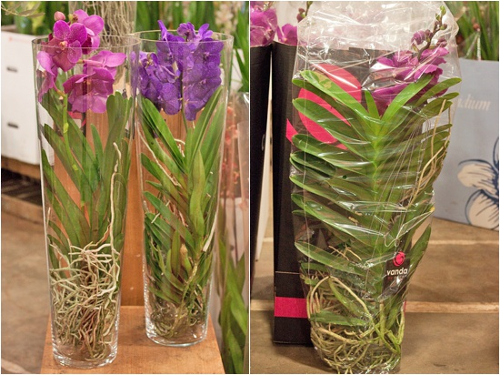 Vanda air orchid plants at New Covent Garden Flower Market
