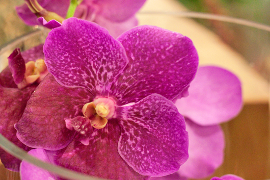 Pink Vanda air orchid plants at New Covent Garden Flower Market