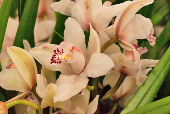 White Cymbidium orchid plants at New Covent Garden Flower Market