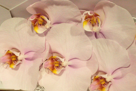 Alpha L.Roze Phalaenopsis Orchids  at New Covent Garden Flower Market