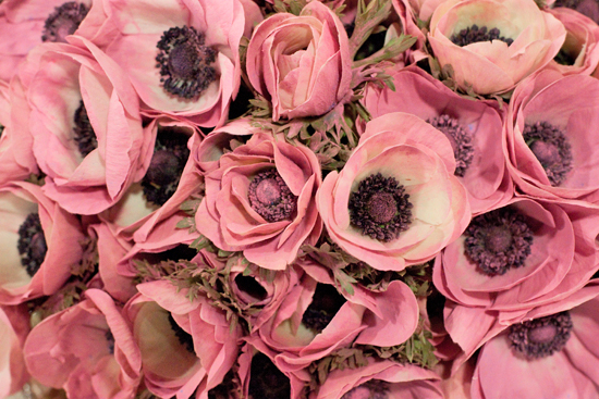 Pink dusted anemones at New Covent Garden Flower Market - March 2015