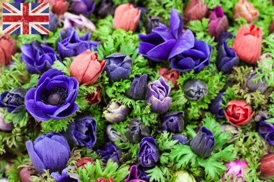 British mixed anemones at New Covent Garden Flower Market - March 2015