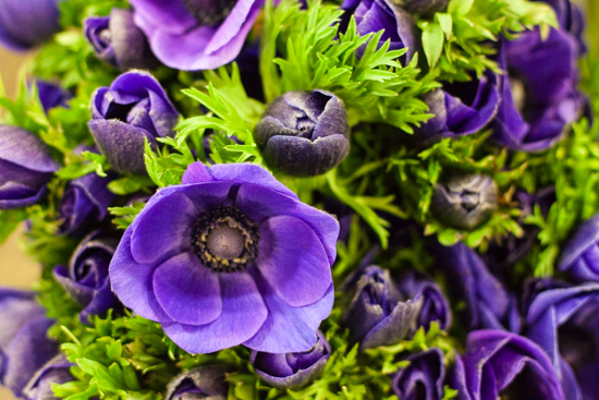 Blue anemones at New Covent Garden Flower Market - March 2015
