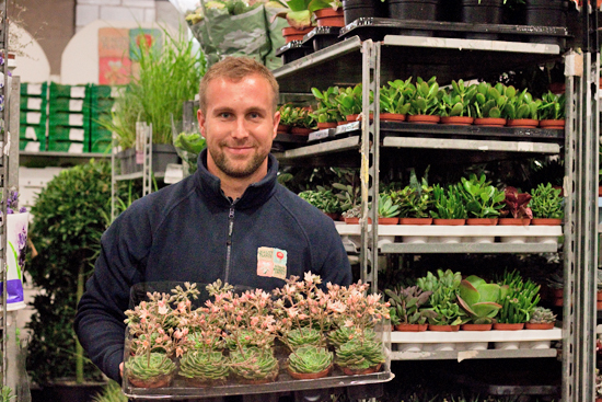 Dean at Quality Plants showing off Succulents at New Covent Garden Flower Market