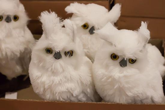 Fluffy white owls at New Covent Garden Flower Market - Christmas Special - December 2014