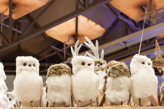 Owls at New Covent Garden Flower Market - Christmas Special - December 2014