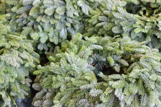 Blue pine wreaths at New Covent Garden Flower Market - Christmas Special - December 2014