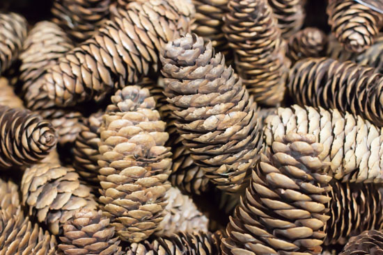 Natural cones at New Covent Garden Flower Market - Christmas Special - December 2014