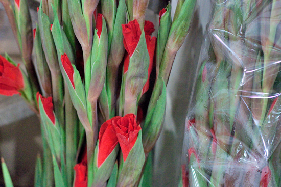 Red Chinon gladioli at New Covent Garden Flower Market