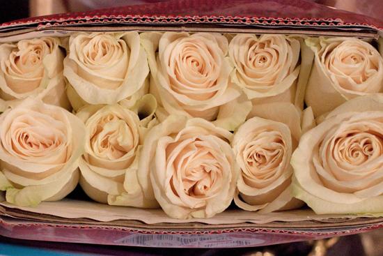 White Vendela rose at New Covent Garden Flower Market - September 2014