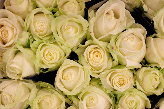 White alalanche roses at New Covent Garden Flower Market - September 2014