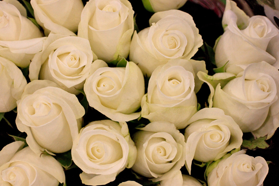 Cream akito roses at New Covent Garden Flower Market - September 2014