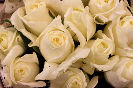 white norma jeane roses at new covent garden flower market september 2014 - White Patience Garden Rose