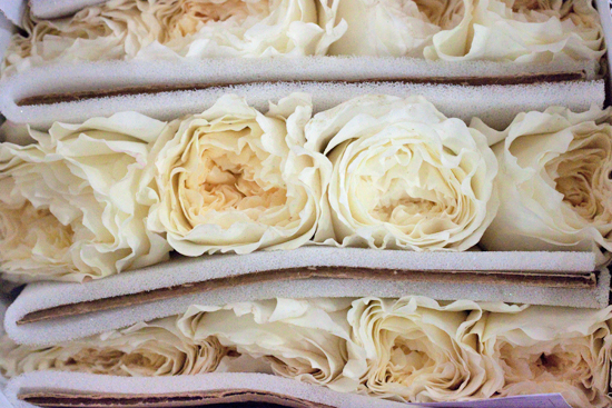 Cream patience (David Austin) rose at New Covent Garden Flower Market - September 2014