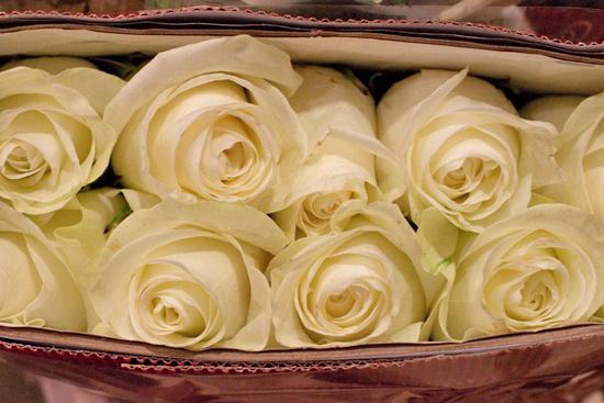 White Polar Star rose at New Covent Garden Flower Market - September 2014