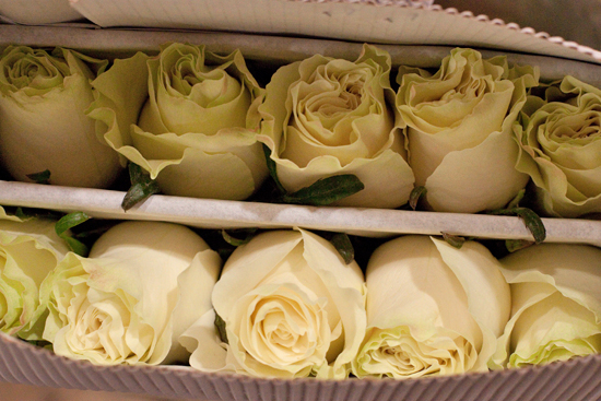Soft cream monidial rose at New Covent Garden Flower Market - September 2014