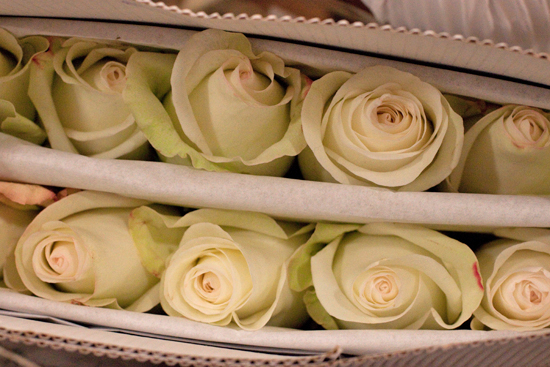 White Alba rose at New Covent Garden Flower Market - September 2014
