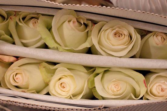 White Alba rose at New Covent Garden Flower Market - September 2014
