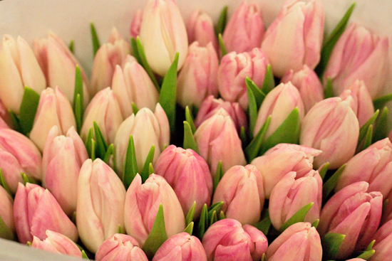 Pale Pink First Class Tulips at New Covent Garden Flower Market