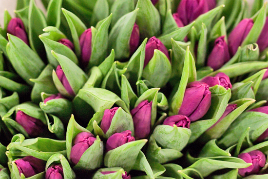 New Covent Garden Flower Market - Tulips - Purple Prince