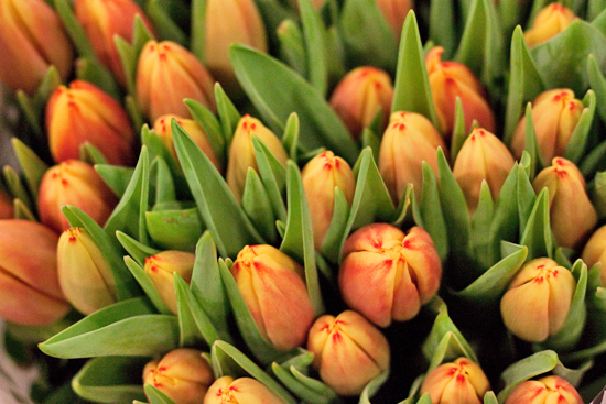 Orange Dow Jones Tulips at New Covent Garden Flower Market