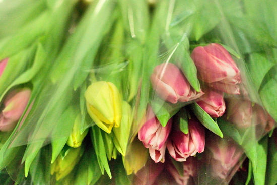 BritishTulips at New Covent Garden Flower Market