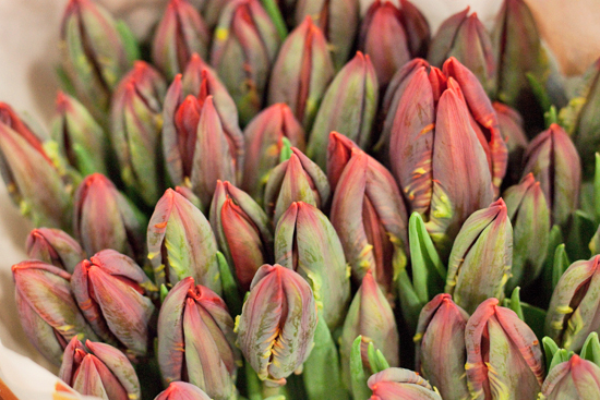Red Rococo Tulips at New Covent Garden Flower Market