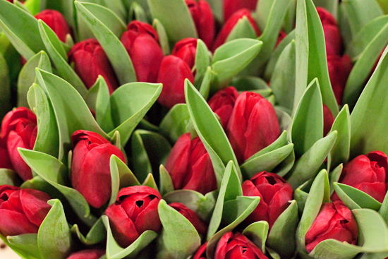 New Covent Garden Flower Market - Tulips - Ile De Re