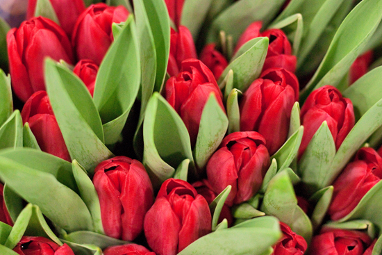 Red Bing Crosby Tulips at New Covent Garden Flower Market
