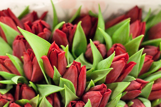 Red Pallada Tulips at New Covent Garden Flower Market