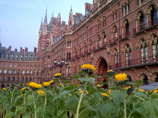 Plantpeople of the Year 2013 - Indoor Garden Design - Sunflowers at St Pancras