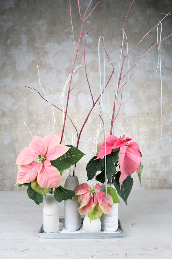 Pink poinsettia vase arrangement