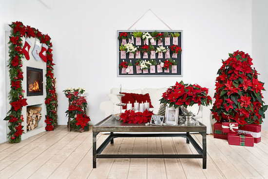 Red poinsettia Christmas tree and room display