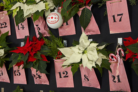 Red and white poinsettia advent calendar