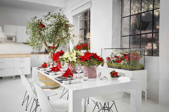 Cut red and white poinsettia table arrangement